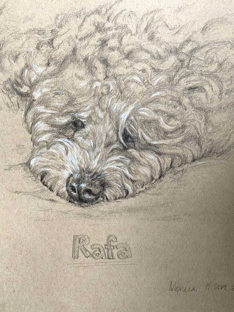 Pencil sketch of Rafa the Maltipoo dog
