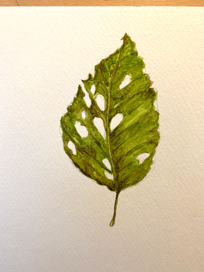 Close up of dried leaf watercolour painting