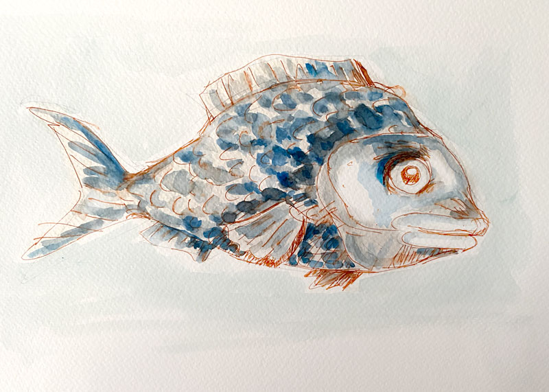Pen and watercolour fish painting